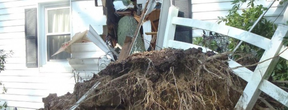 Insurance Repair – Major Tree Damage